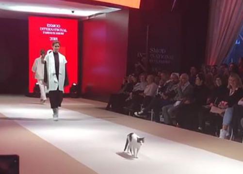 「catwalk」不是指走臺步!