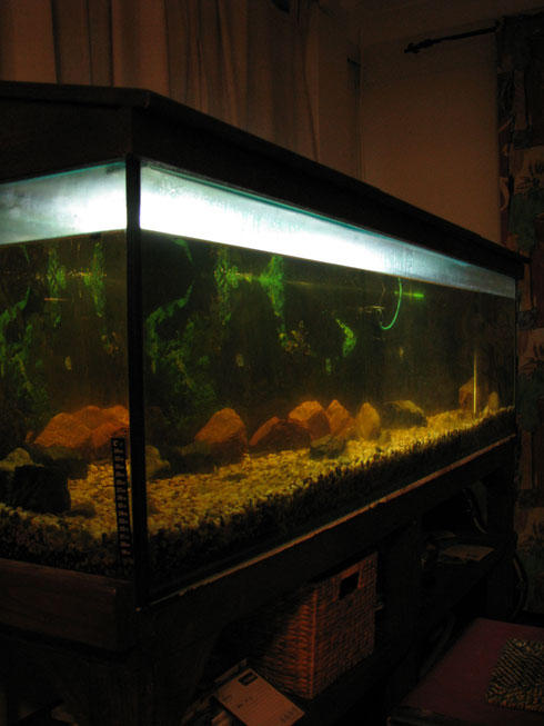 FOR SALE: Fish tank 6ft aquarium