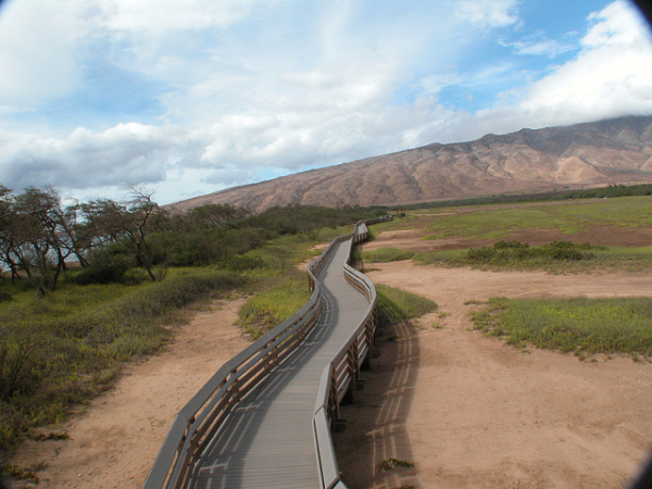 13 Free Things to Do in Maui Vacatia - transfer agreement