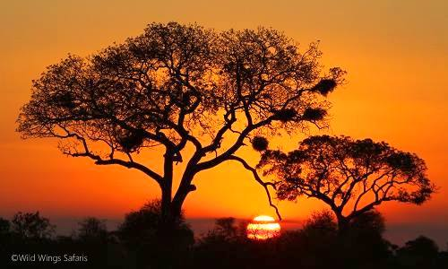 Victoria Falls Sunset Wallpaper Top 10 Things You Probably Didn T Know About Kruger