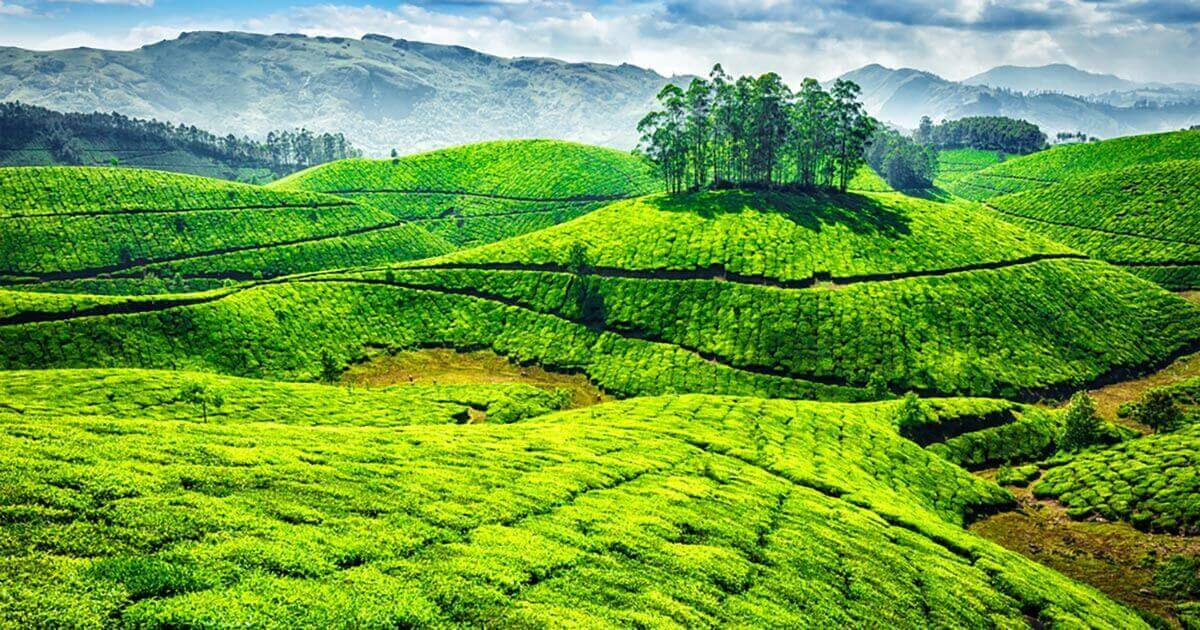 Ooty Hd Wallpapers 15 Captivating Munnar Tourist Places You Must Visit