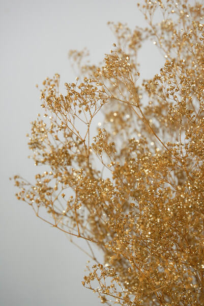 Fall Fairy Wallpaper Gold Baby S Breath Branches 4oz Bunch 26in
