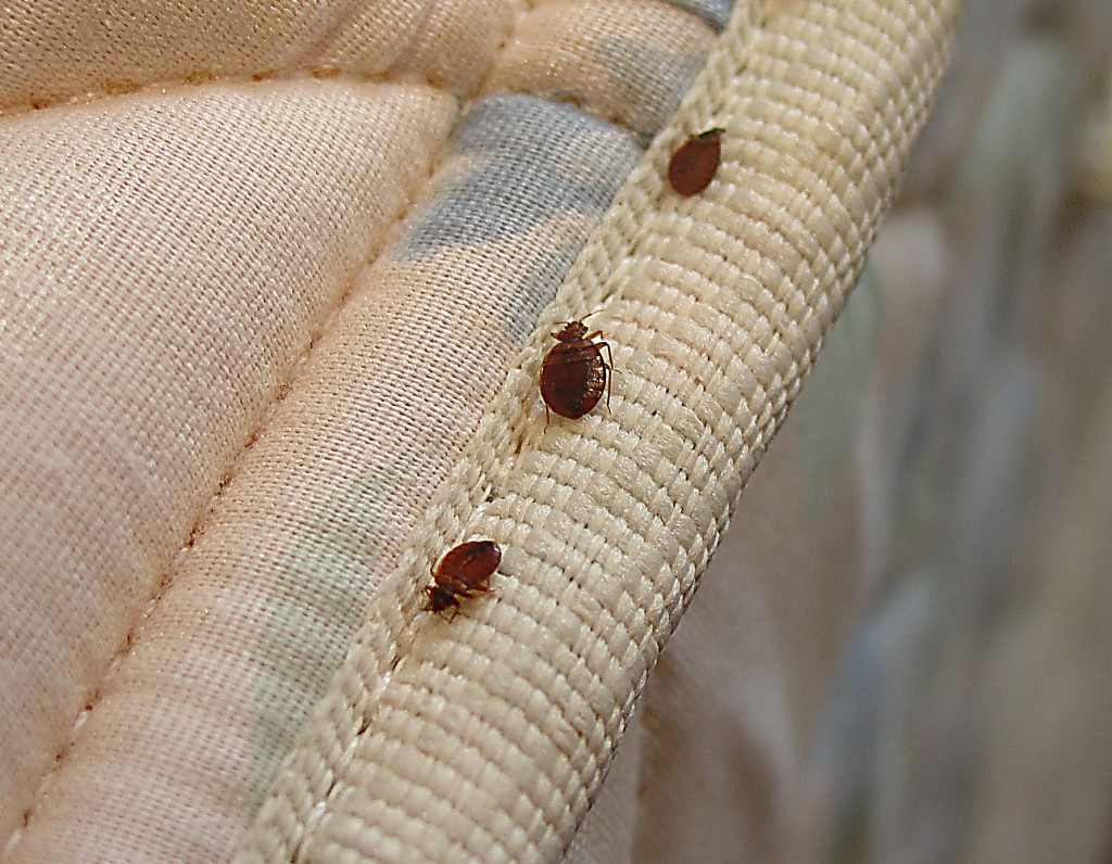 Getting Rid Of Bed Bugs Getting Rid Of Bed Bugs 10 Places Bed Bugs Love To Hide