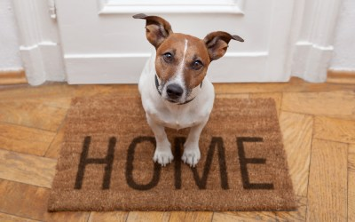 Dog Friendly Home Design Ideas