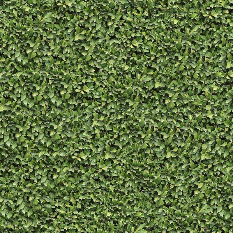 My Log Home 3d Live Wallpaper Laurel Bush Surface Seamless Tileable Texture Stock