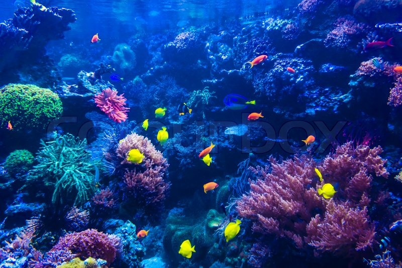Colorful Animal Print Wallpaper Tropical Fishes Meet In Blue Coral Reef Sea Water Aquarium