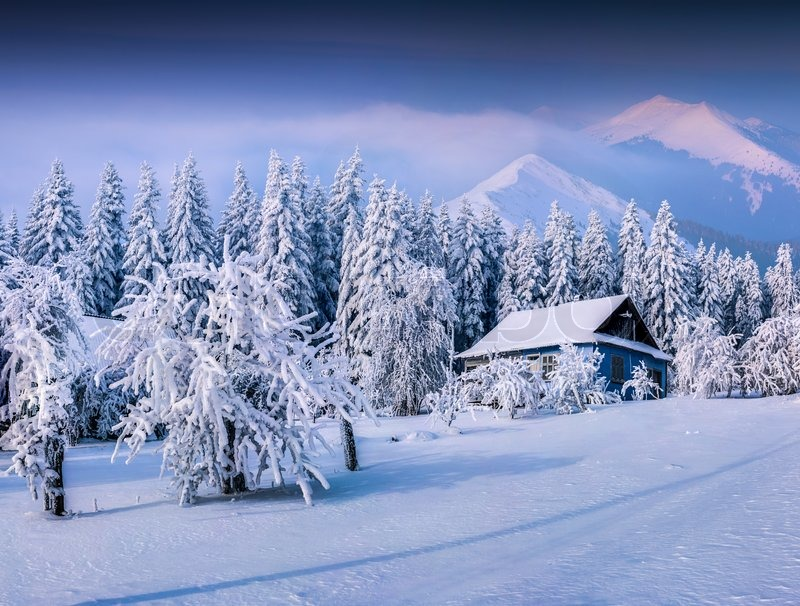 Real Snowflakes Falling Wallpaper Winter Fairytale Heavy Snowfall Covered The Trees And