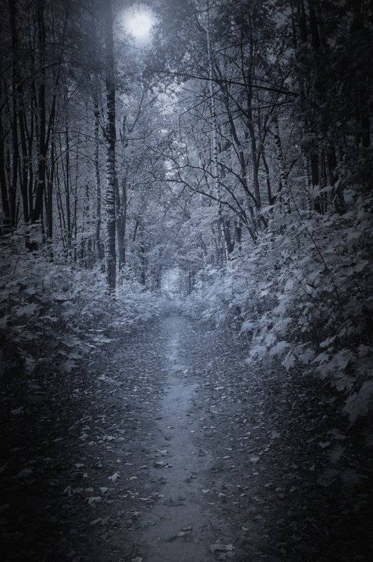 Village Girl Photo Wallpaper Path In The Deep Forest At Night Time Stock Photo