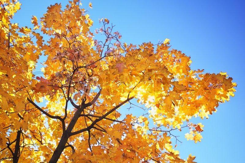 Hd Wallpaper Fall Leaf Change Abstract Foliage Background Beautiful Tree Branch In