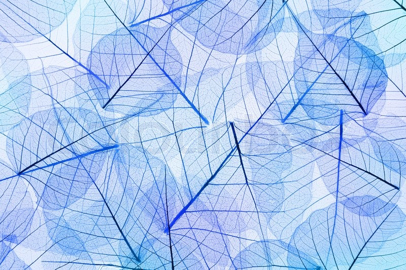 Blue Fall Wallpaper Blue Abstract Leaves Background Transparent Cell