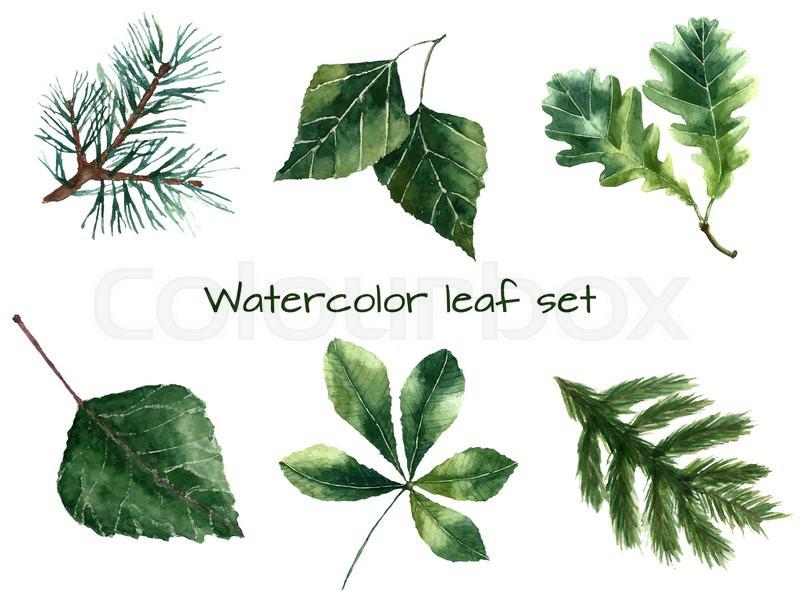 Set of watercolor leaves pine, chestnut, oak, beech, poplar, fir