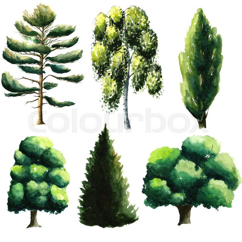 Set of watercolor trees pine, chestnut, oak, fir tree, beech