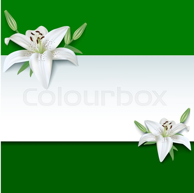 Wesak Wallpaper Hd Festive Rectangular Frame With White Summer 3d Flowers