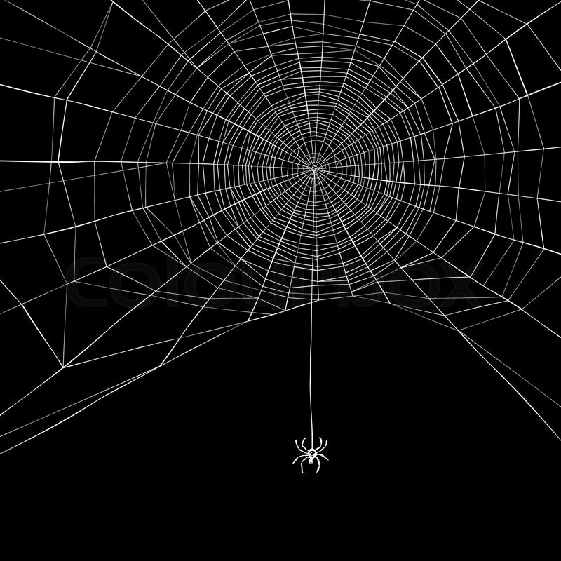 Cute Cat Hd Wallpapers For Mobile Halloween Background Spider Web Vector Illustration