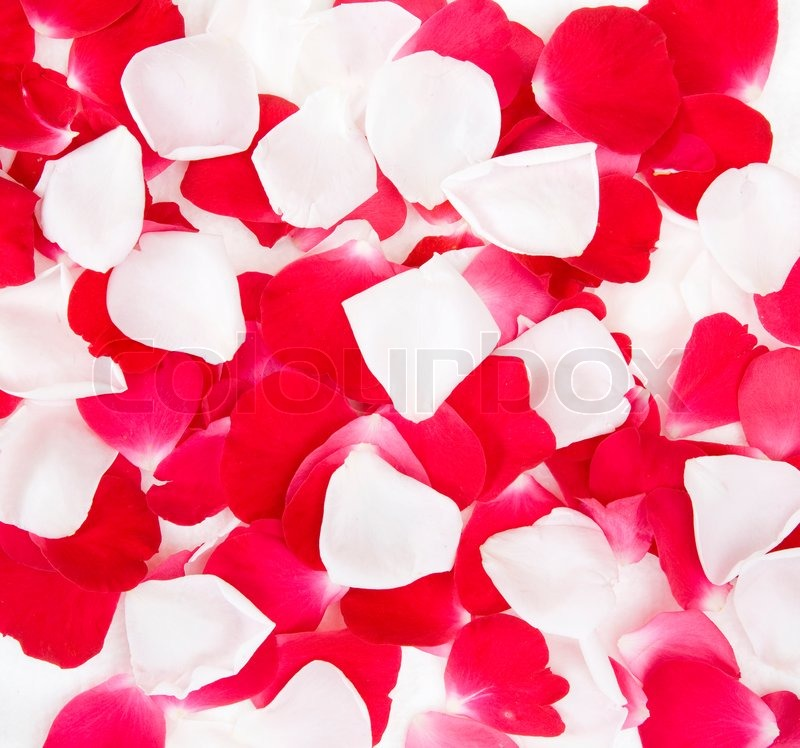 Falling Rose Petals Live Wallpaper Red And White Rose Petals Background Stock Photo Colourbox