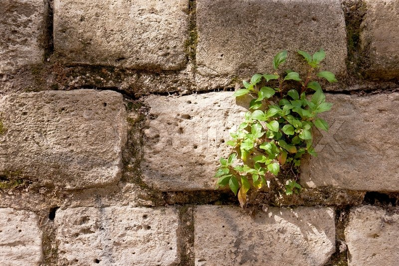 3d Grey Brick Effect Wallpaper Lonely Green Plant Growing On A Stone Wall Stock Photo