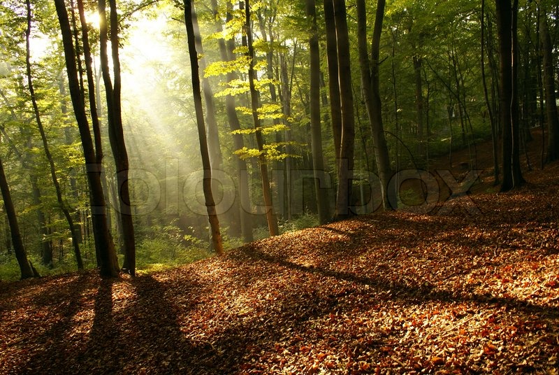 Fall Morning Sun Wallpaper Dawn In A Forest In The Foggy Morning Stock Photo