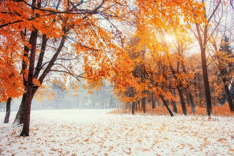 Fall Leaves Falling Wallpaper October Mountain Beech Forest With First Winter Snow