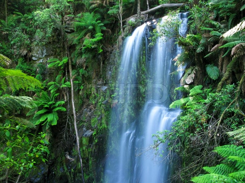 Fall Moving Wallpaper Medium Sized Water Fall In A Rain Forest In Australia