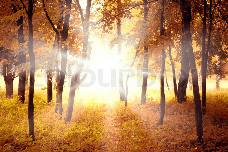 Fall Leaves Road Wallpaper Beautiful Autumn Forest And Bright Morning Sun Stock