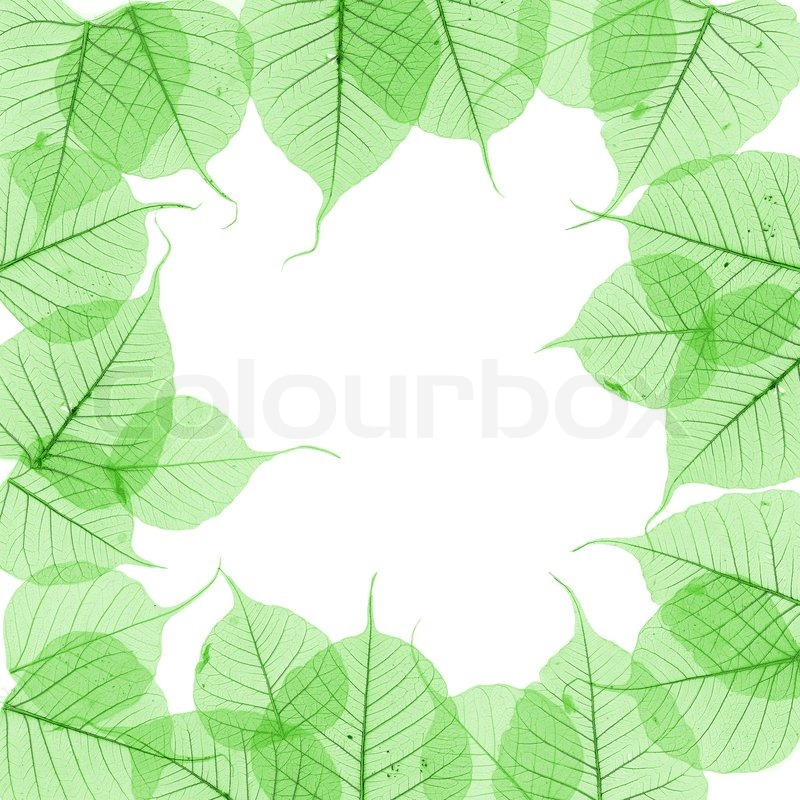 Tree With Leaves Falling Wallpaper Green Leaves Border Over White Stock Photo Colourbox