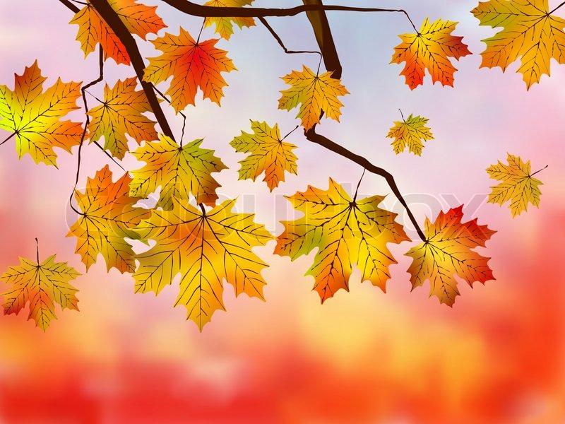 Falling Leaves Live Wallpaper Hd Herbst Rote Ahorn Wald Hintergrund Vektorgrafik Colourbox