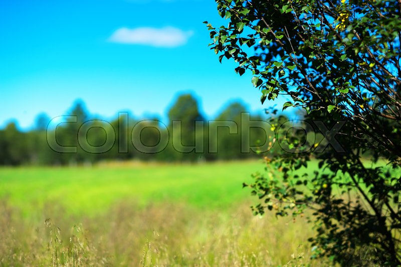 Simple forest with bokeh tree landscape background hd Stock Photo