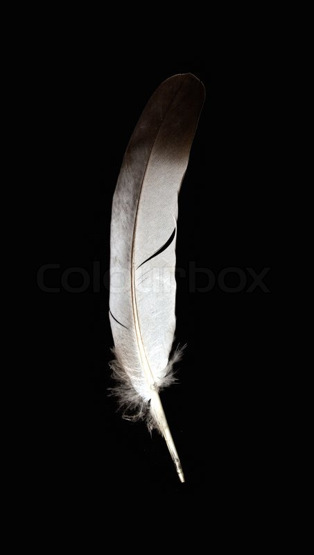 Falling Feathers Wallpaper White Feather On A Black Background Stock Photo Colourbox