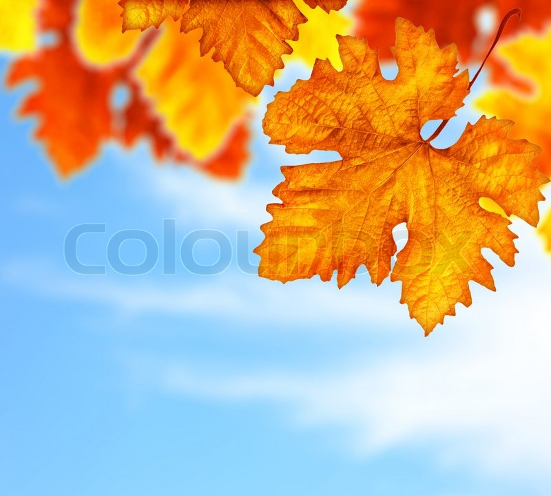 Free Animated Falling Leaves Wallpaper Beautiful Autumn Tree Border With Old Dry Colorful Leaves