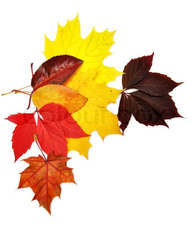 Fall Leaves Desktop Wallpaper Backgrounds Colorful Autumn Leaves Over White Background With Clipping