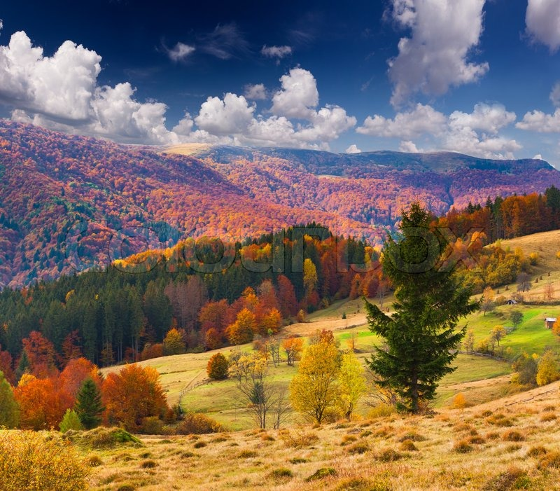American Paint And Wallpaper Fall River Colorful Autumn Landscape In The Mountains Stock Photo
