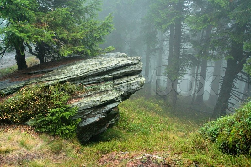 Panoramic Wallpaper Fall Rock In Mist Of Forest Stock Photo Colourbox