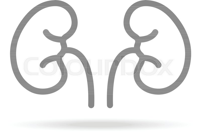 Human Kidneys, Nephrology Icon In Trendy Thin Line Style Isolated On - apps symbol