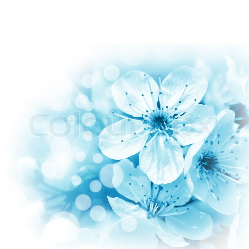 Blue flowers on white background Stock Photo Colourbox - blue flower backgrounds