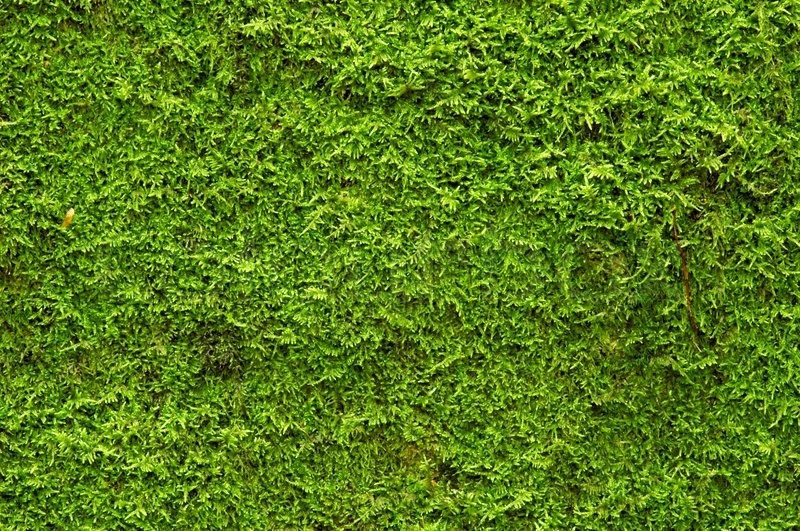 Free Wallpaper Nature Hd A Background Of Green Moss Stock Photo Colourbox