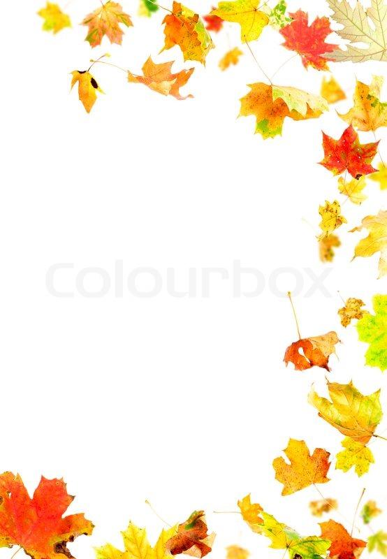 Fall Leaves Wallpaper Border Autumn Leaves Frame Stock Photo Colourbox