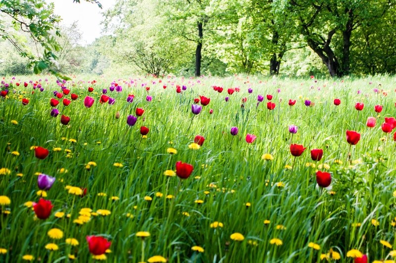 A Beautiful Meadow With Trees And Blooming Tulips In The