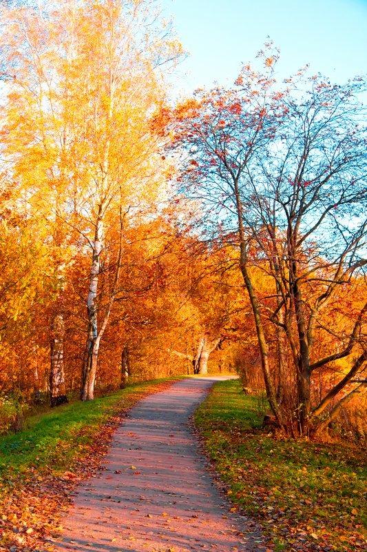 Colorful Fall Scene Wallpaper Falling Leaves Fall Landscape Stock Photo Colourbox