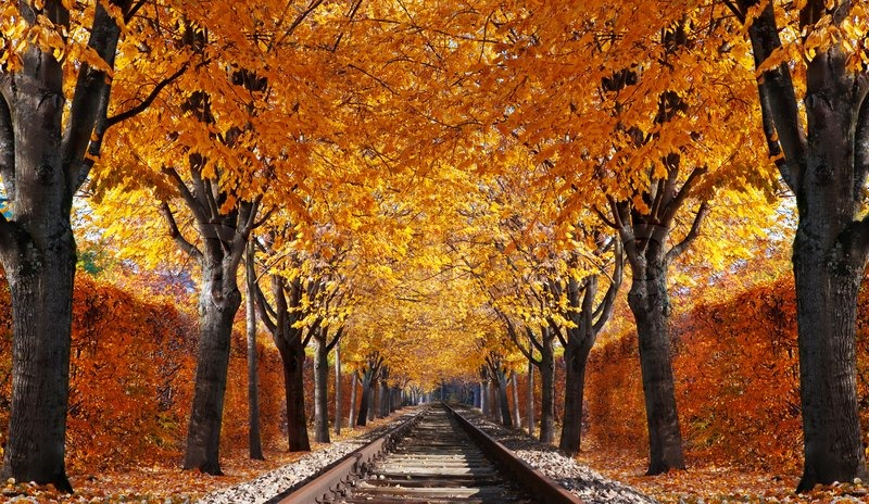 New England Fall Foliage Wallpaper Abandoned Railroad In Autumn Forest Stock Photo Colourbox