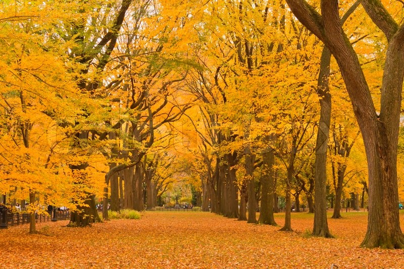 New Hampshire Fall Foliage Wallpaper New York City Central Park Alley In The Stock Photo