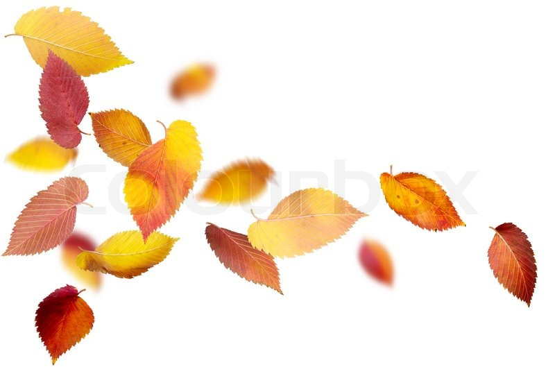 Free Fall Wallpaper Downloads Falling And Spinning Autumn Leaves On White Background
