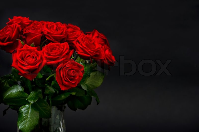 Red Roses On Black Background Stock Photo Colourbox