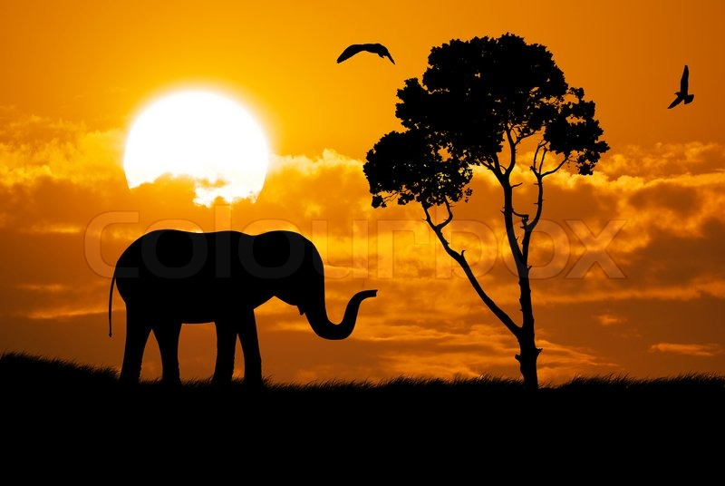 African Animal Wallpaper Border Silhouette Of Elephant Stock Photo Colourbox