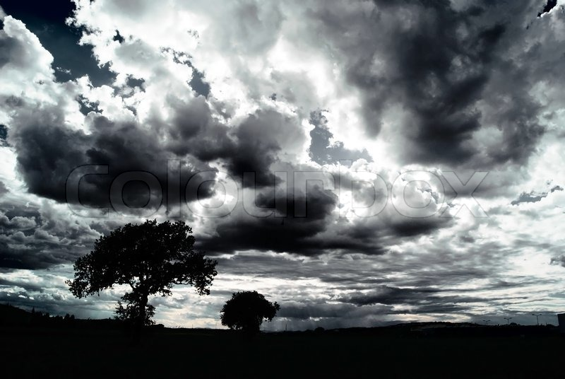 Free Wallpaper Fall Season Scary Dark Scenery With Naked Trees Clouds Stock Photo