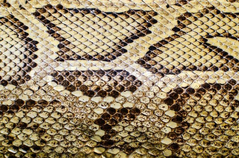 Black Animal Print Wallpaper Snake Skin Texture Stock Photo Colourbox
