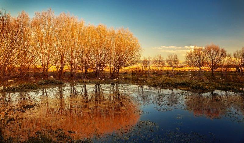 Fall Landscape Wallpapers Free Beautiful Autumn Landscape Dry Trees Blue Sky Tree