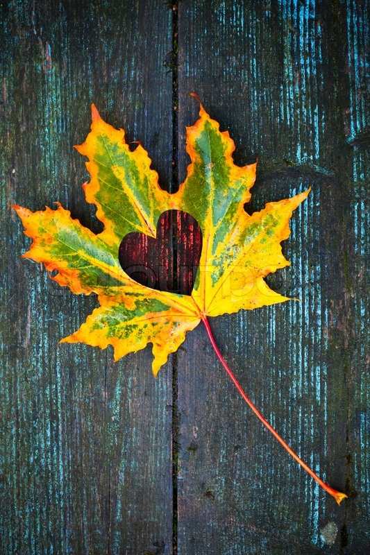 Fall High Definition Wallpapers Fall In Love Photo Metaphor Colorful Maple Leaf With Heart