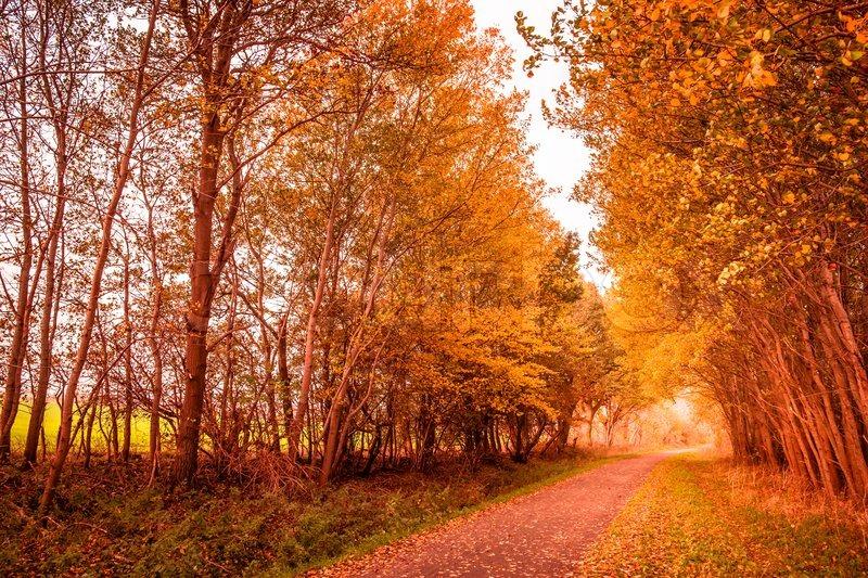 Falling Maple Leaves Wallpaper Beautiful Autumn Landscape In Warm Stock Photo