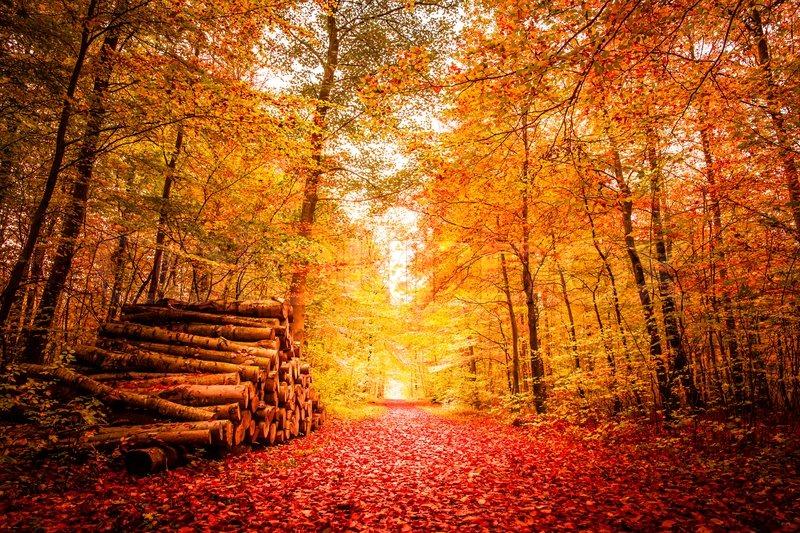 Majestic Fall Wallpaper Beautiful Autumn Landscape In Warm Colors Stock Photo