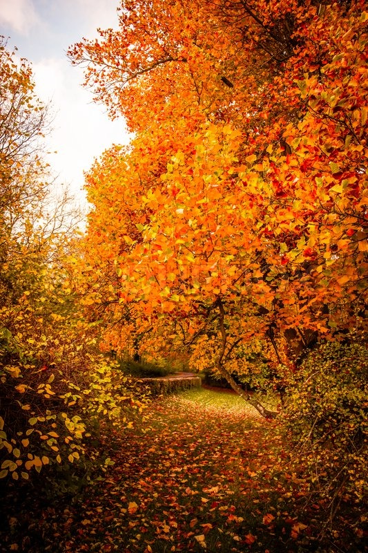 Tree With Leaves Falling Wallpaper Beautiful Autumn Landscape In Warm Colors Stock Photo